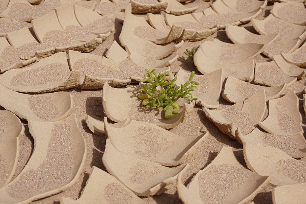 Desert Trip in Egypt